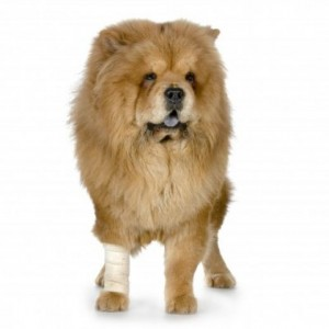 BudgetPetCare - First Aid Kit for pets