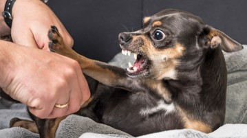 Aggression could be pain-related