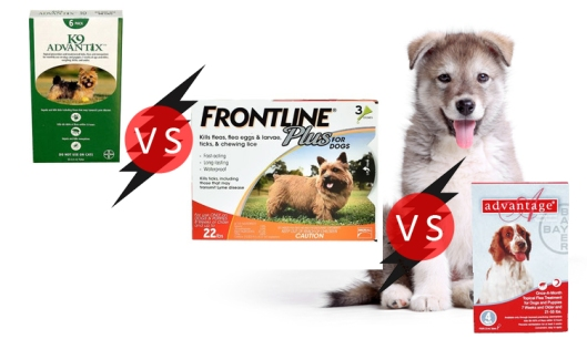 Differences Among Frontline Plus, K9 Advantix And Advantage