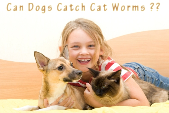 Can Dogs Catch Cat Worms