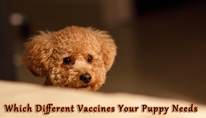 Which Different Vaccines Your Puppy Needs