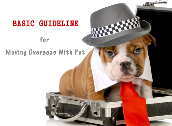 Basic-Guideline-For-Moving-Overseas-With-Pet