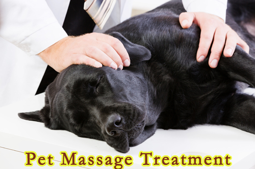 Pet Massage Treatment
