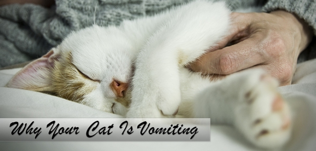 Why Your Cat Is Vomiting