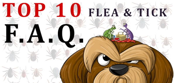 Flea and Tick FAQs