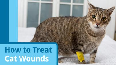 Tips on cat wound care