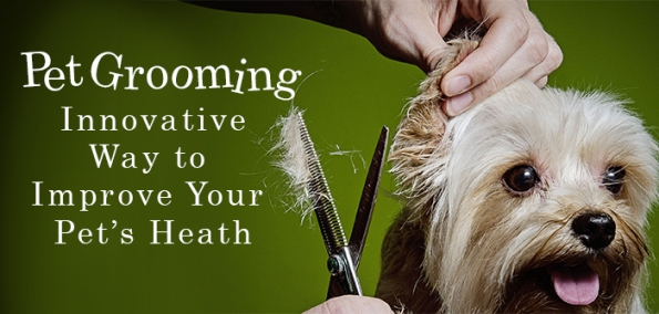 Pet Grooming Innovative Ways to Improve Pet's Health