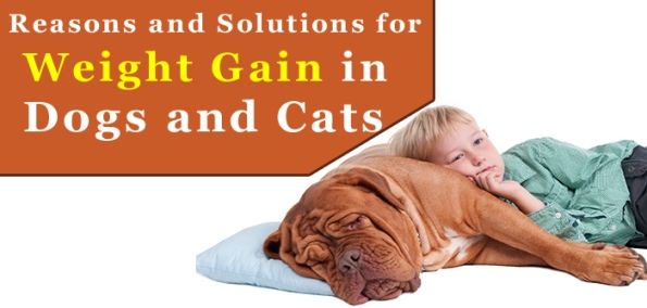 Weight Gain in Dogs and Cats