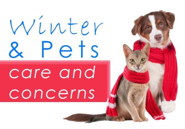 Winters and Pets – Care and Concerns