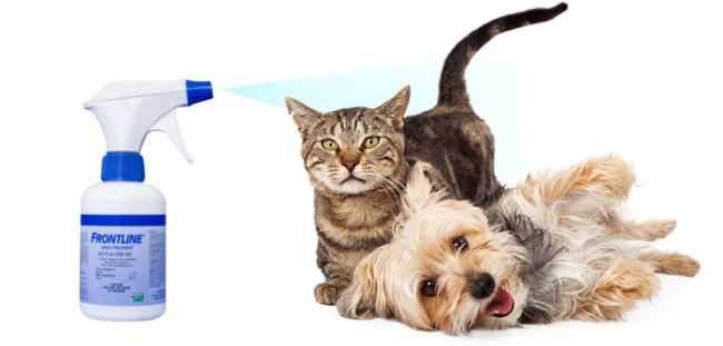 Effectiveness Of Frontline Spray For Dogs