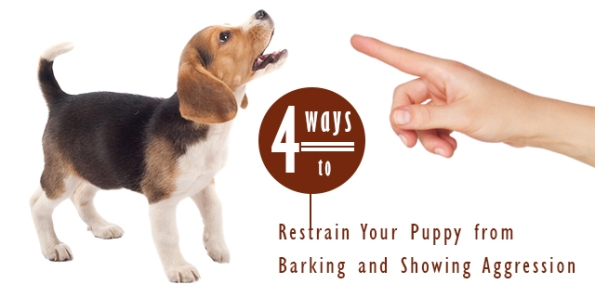 Restrain Your Puppy from Barking and Showing Aggression