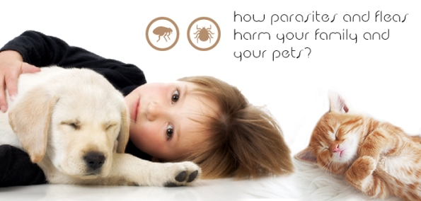 How Parasites and Fleas Harm Your Family and Your Pets?