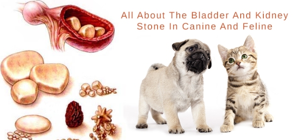 Bladder And Kidney Stones In Dogs And Cats