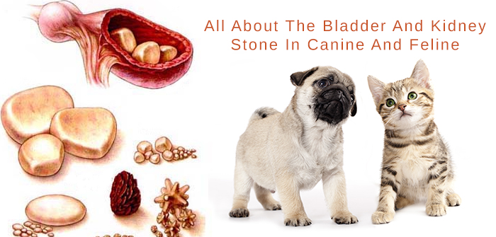 Bladder And Kidney Stones In Dogs And Cats – Diagnose, Treatment &Prevention