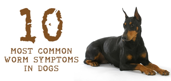 worm symptoms in dogs