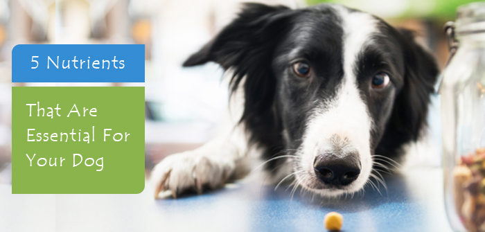 Nutrients That Are Essential For Your Dog