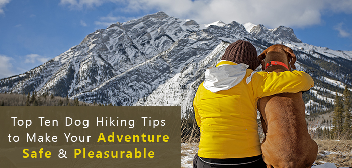 Top Ten Dog Hiking Tips to Make Your Adventure Safe & Pleasurable