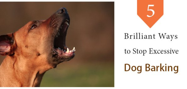 Stop Excessive Dog Barking
