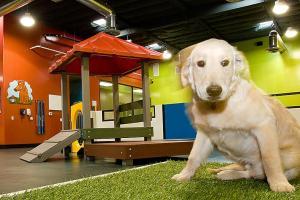 Doggy Daycare Help