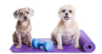 exercise tips for your doggy