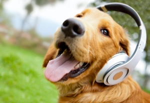 Music Speakers for Dogs