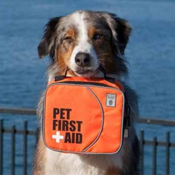 first-aid-kit-canine-friendly