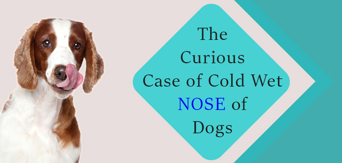 The Curious Case of Cold Wet Nose ofDogs