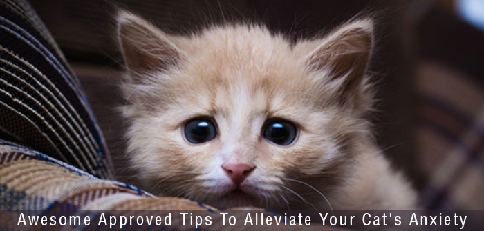 Tips To Reduce Your Cat'sAnxiety