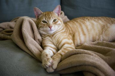 Tips to reduce anxiety in Cats