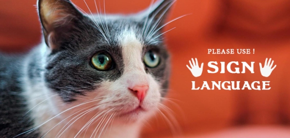 Sign Language For Deaf Cat
