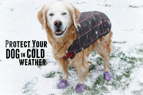 caring dog in cold weather