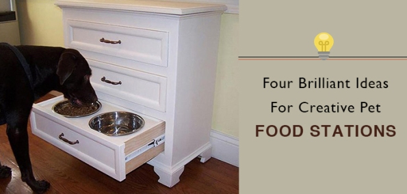 creative pet food stations