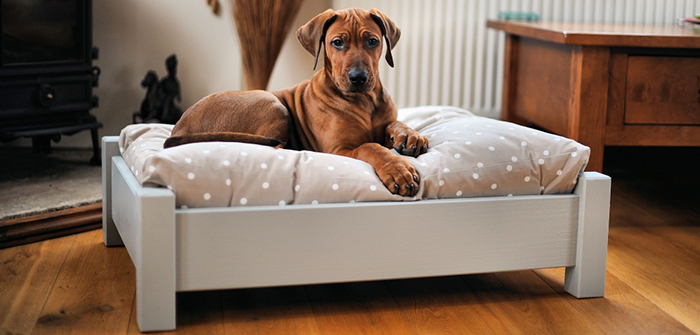 Dog Beds : An Ultimate Place For Dogs To Relax