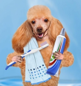dog dental care and cleaning