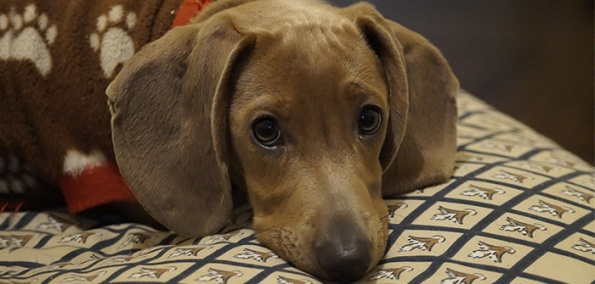 Life Style And Health Issues in Dogs