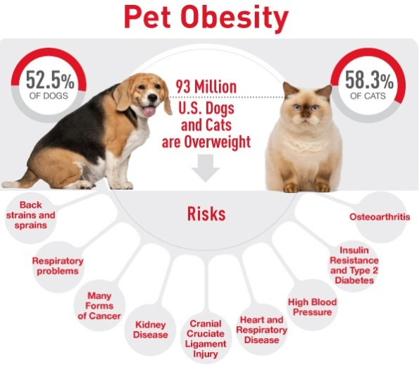 Pet Obesity Details in USA