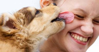 why your dog licks your face