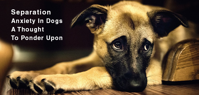 Separation Anxiety In Dogs – A Thought To PonderUpon