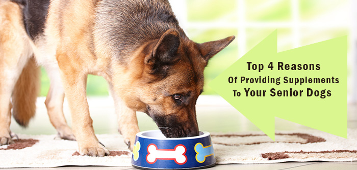 Top 4 Reasons Of Providing Supplements To Your Senior Dogs