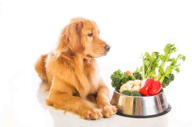 supplements & vegetables for dogs