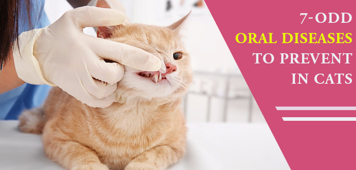 7-ODD Oral Diseases to Prevent in Cats