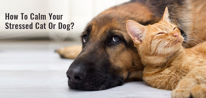 How to Calm Your Stressed Cat or Dog?