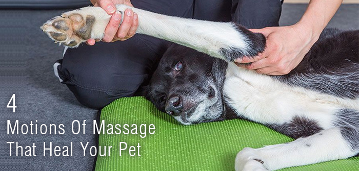 4 Motions Of Massage That Heal Your Pet