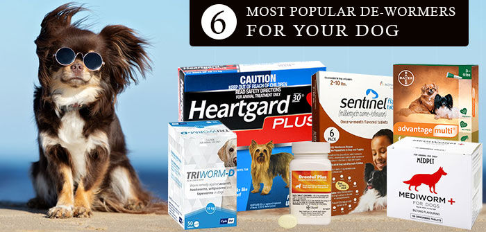 6 MOST POPULAR DE-WORMERS FOR YOURDOG