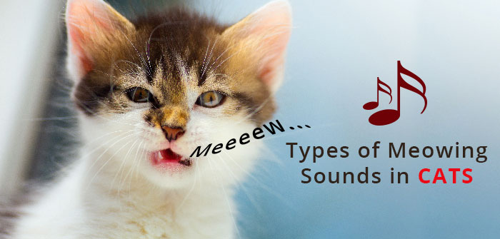 Types of Meowing Sounds inCats